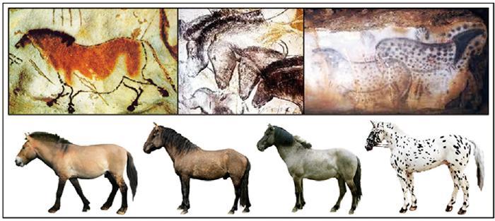 """Fenotipos de caballos representados en el arte paleolítico: Lascaux (bayo), Chauvet (negro) y Pech-Merle (""""leopardo"""")"""