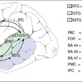 El mapa cerebral del lenguaje (EPIC!!!)